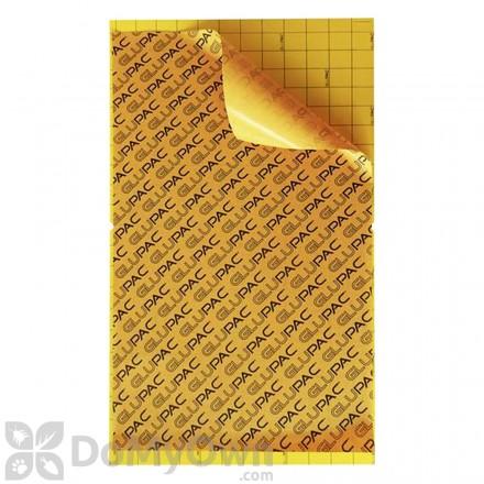 Flytrap Professional 80 Glupac Glue Boards (Yellow) GB011