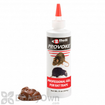 Rat Control Amp Killer Products How To Get Rid Of Rats