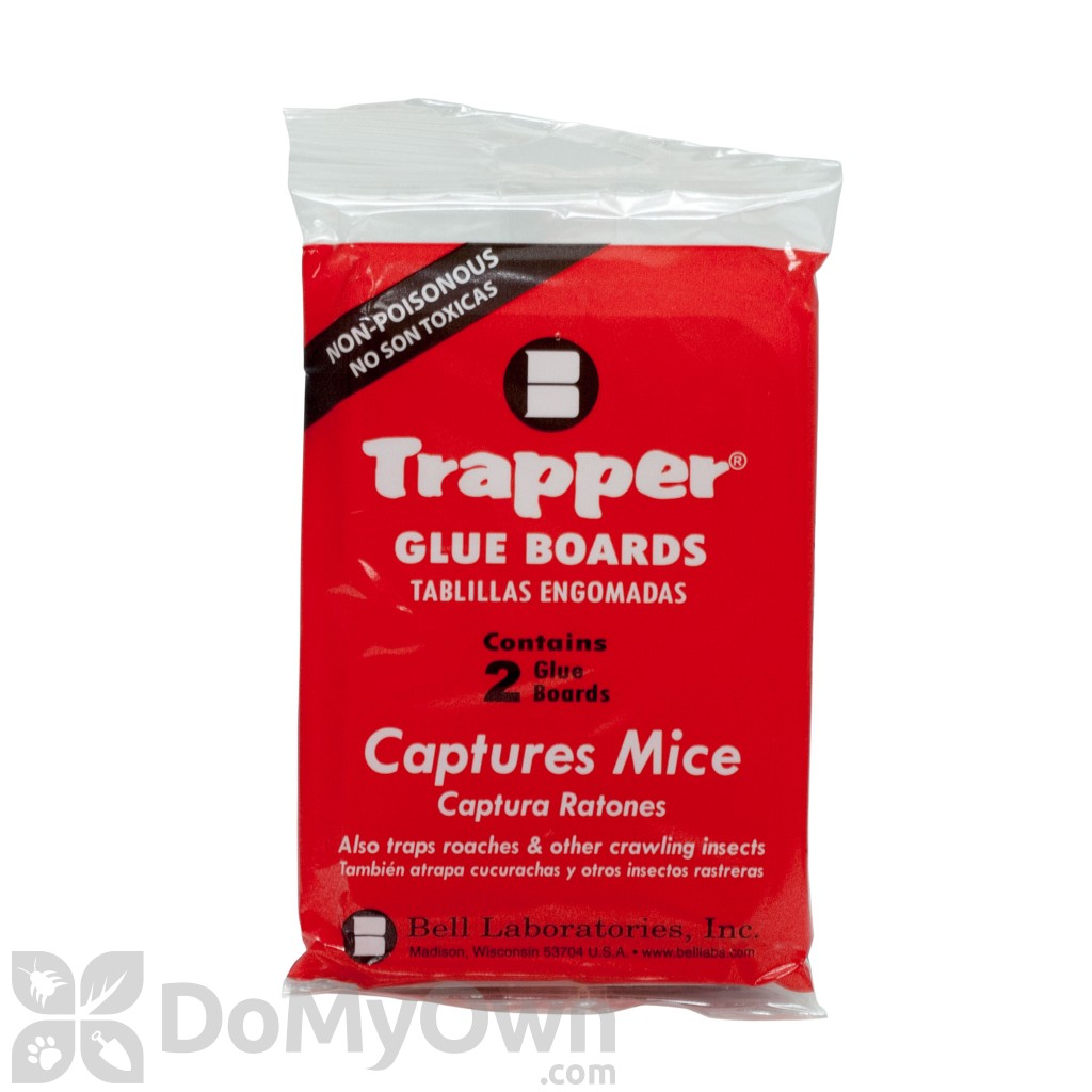 Trapper Mouse Glue Board Traps Computer Memory Stick Circuit Trap Used To Catch Small