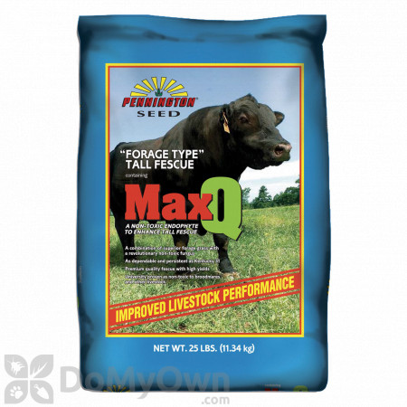 Pennington MaxQ Jesup Forage Tall Fescue