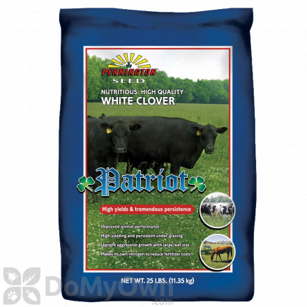 Pennington Patriot White Clover
