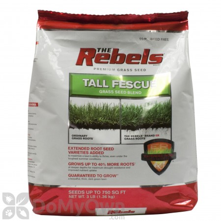 The Rebels Tall Fescue Blend Powder Coated Grass Seed
