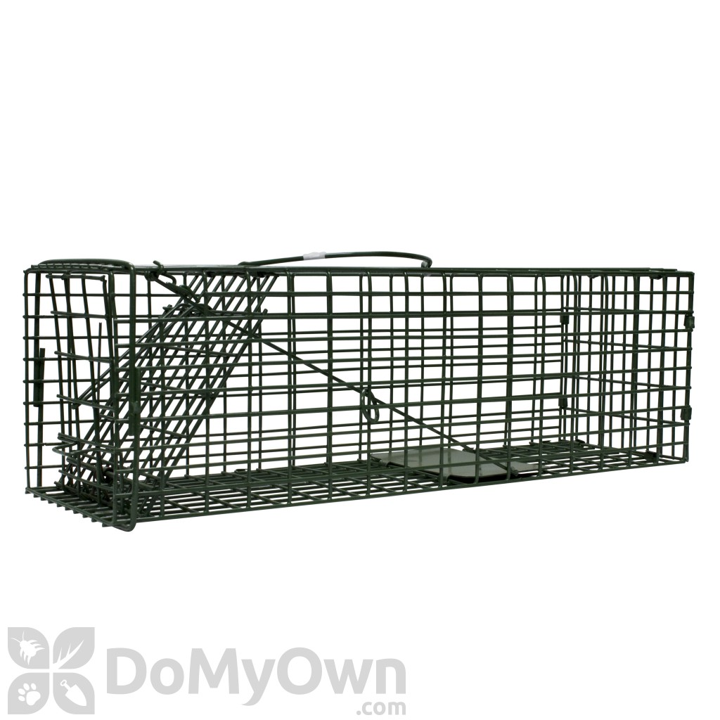 Duke Standard Single Door Rodent and Squirrel Cage Trap (1100)