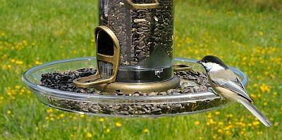 Aspects Quick Clean Bigfoot Bird Feeder Tray (423)