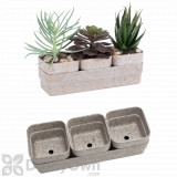Bloem Eco Succulent Flower Pot Planter with Saucer  4 - Pack