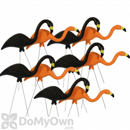 Bloem Spooky Flamingo 25 in. Halloween Black Orange Yard Decor (10 - Pack)