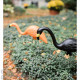 Bloem Spooky Flamingo 25 in. Halloween Black Orange (2 - Pack)