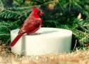 Happy Bird Wild Bird Super Solar Sipper (10040)