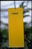 Koppert Horiver - Small Yellow Trap