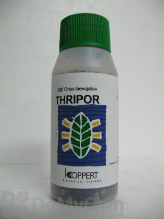 Koppert Thripor-I (Orius insidiosus) 100 ml