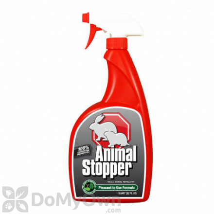 Squirrel Repellent & Squirrel Deterrent - Best Squirrel