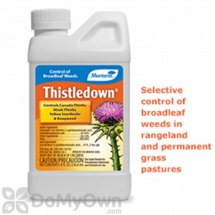 Monterey Thistledown