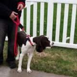 Soft Lines 2 Handled Sidewalk Safety Dog Snap Leash 5 / 8\