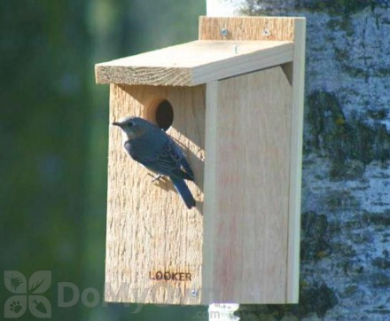 Songbird Essentials View Thru Bluebird House (SE542)