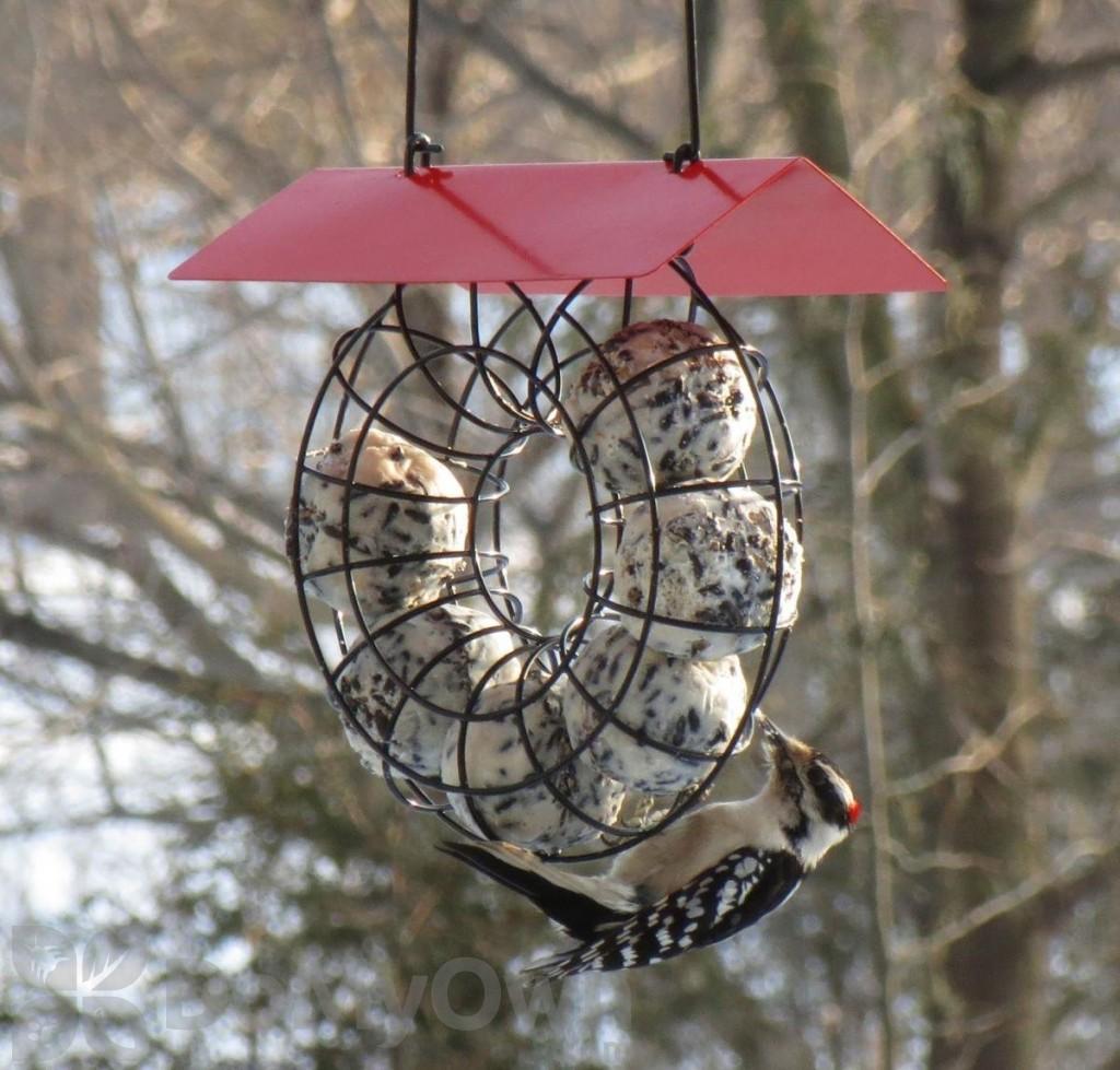 Songbird Essentials Red Roof Round Wire Circle Suet Ball Bird Feeder ...