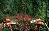 Songbird Essentials Victorian Love Hummingbird Feeder (SEHHVCT4)