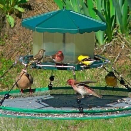 Songbird Essentials Seed Hoop for Bird Feeder 30 in. (SEIA13921)