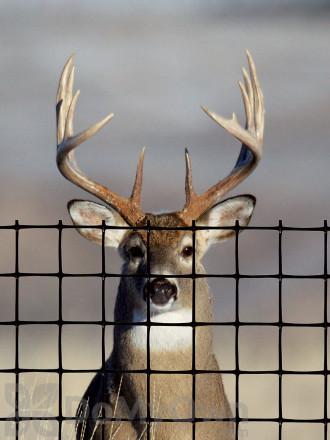 Tenax Deer Fence Pro 7.5 x 165