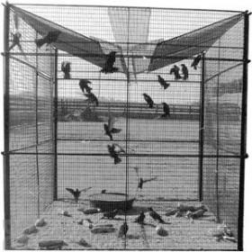 Bird Barrier Starling Trap (tt-st10)