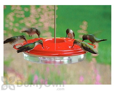 thriftyfun a tip of from keeping out feeder bees bird humming hummingbird away