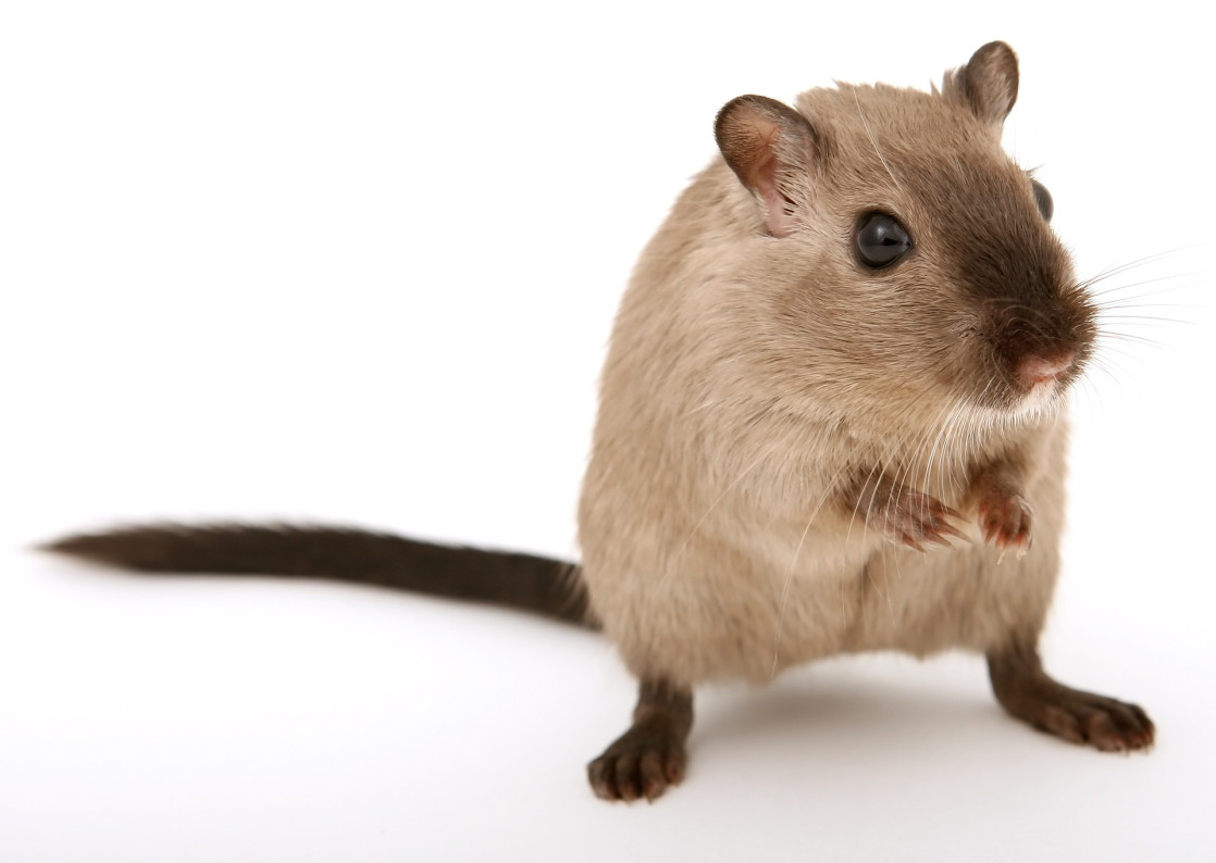 How to Get Rid of Dead Animal Smell in House | Step-By-Step