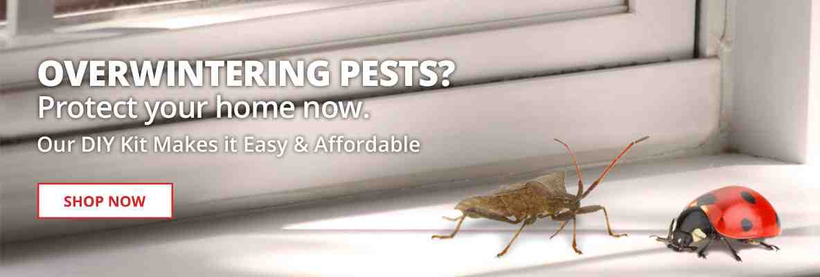 Protect your home now with our DIY Overwintering Pest Kit