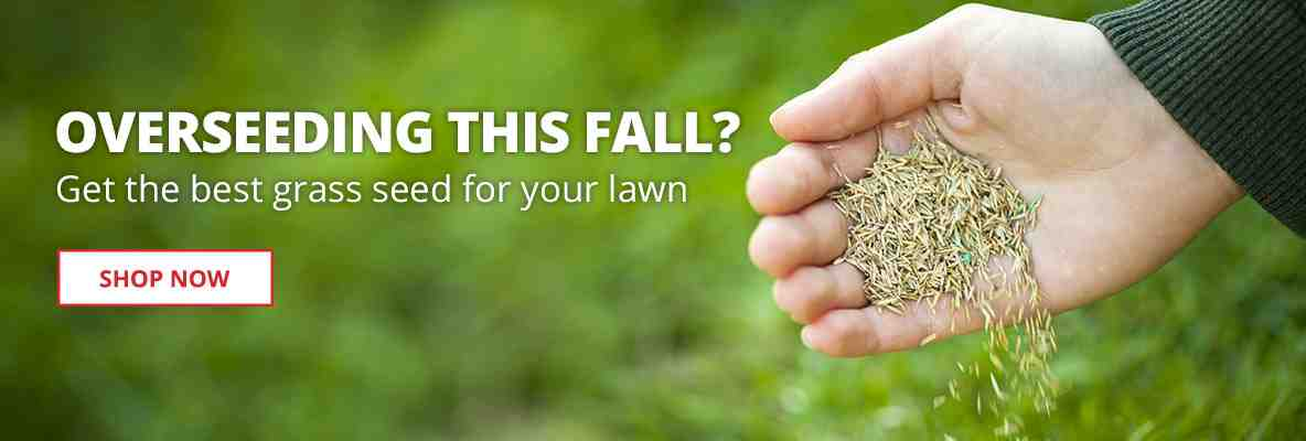 Overseeding this Fall? Get the best grass seed for your lawn.