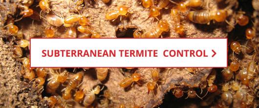 1e590689ddc Subterranean Termite Control