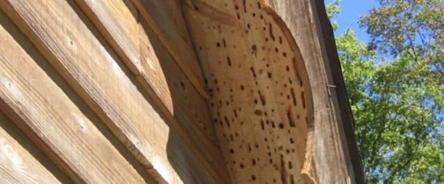 Carpenter Bee Inspection Guide (Inspect)