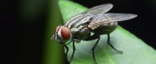Cluster Fly Prevention Guide (Prevent)