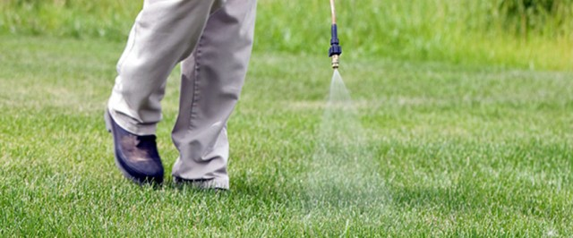 How to Get Rid of Crabgrass  (Treat)