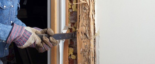 Drywood Termite Treatment Guide (Treat)