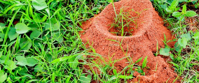 Fire Ant Inspection Guide (Inspect)