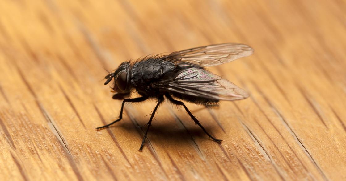 How to Combat Pest Problems After a Flood | Flood Pest Control