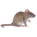 Mouse Repellent