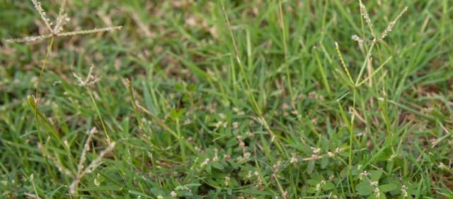 Post Emergent Herbicide Weed S