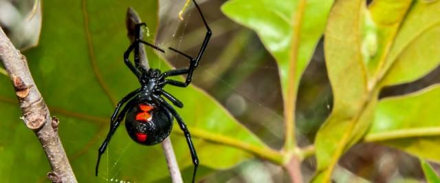Spider Identification Guide (Identify)