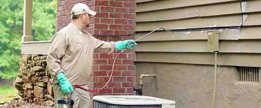 Pest Control Treatment Right