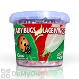 Orcon Ladybug and Lacewing (500 adult ladybugs  1000 lacewing eggs)