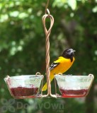 Songbird Essentials Two Cup Jelly Bird Feeder (SEHHJELY)