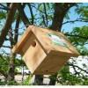 Songbird Essentials Mini Wren Bird House (SESCS3003)