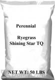 Pennington Perennial Rye Shining Star TQ
